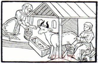 Butterzauber in Oslebshausen (Sammlung Wagenfeld)